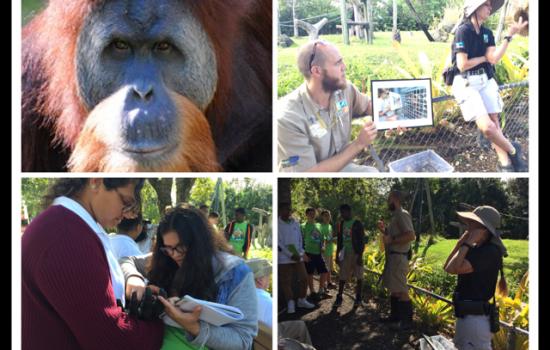 Eighth Grade Keeper Talk – Orangutans
